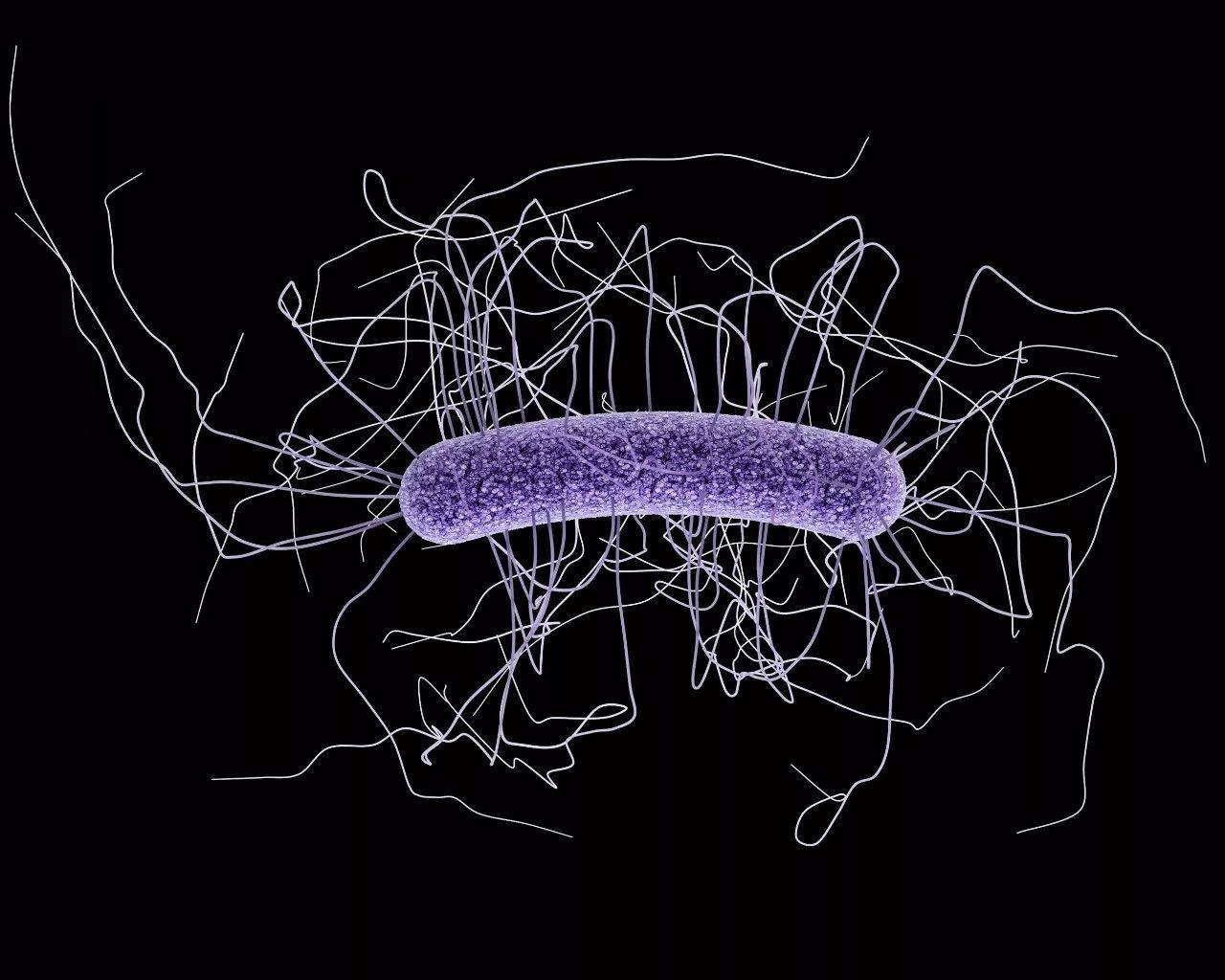 《自然》:万万没想到!经常吃到的海藻糖竟会让高毒力致病菌毒力倍增,或是艰难梭菌感染大爆发的幕后推手 | 科学大发现